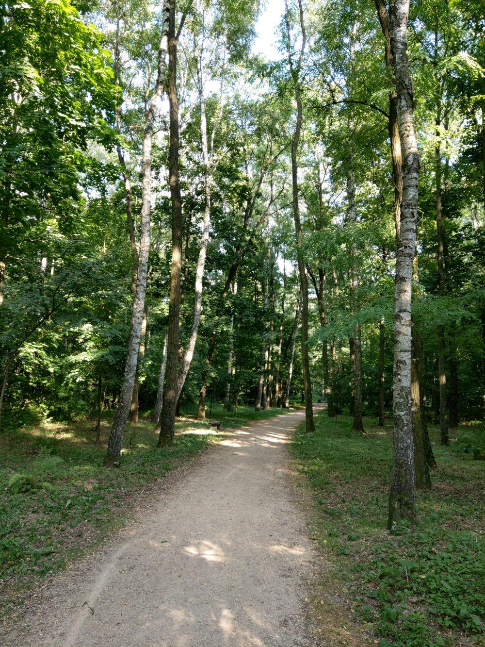 zdjęcie w lesie htc u12 plus
