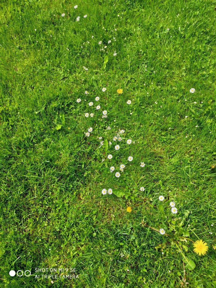 xiaomi mi 9 se kwiaty