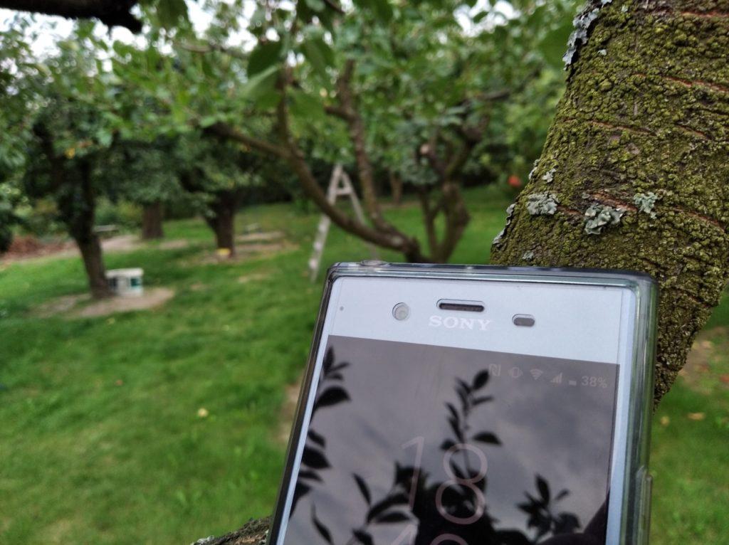 Xiaomi Redmi 7a przykładowe zdjęcie