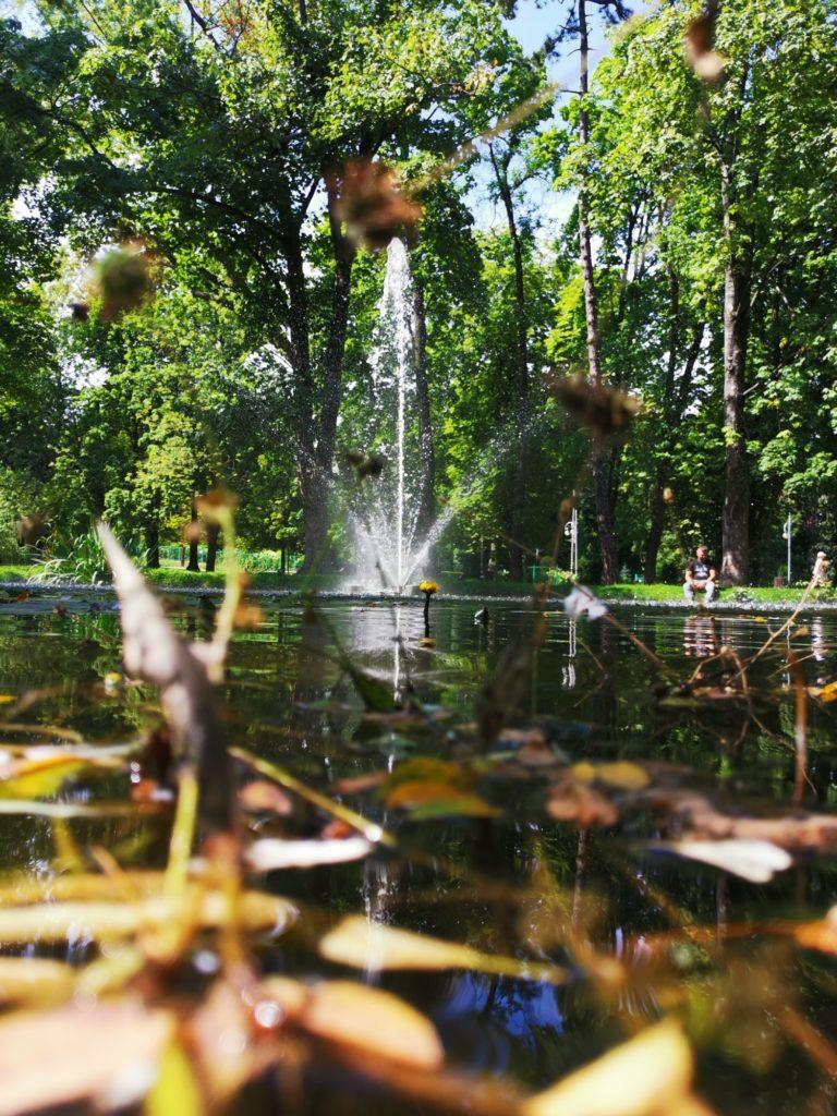 Huawei Mate 20x zdjęcie parku