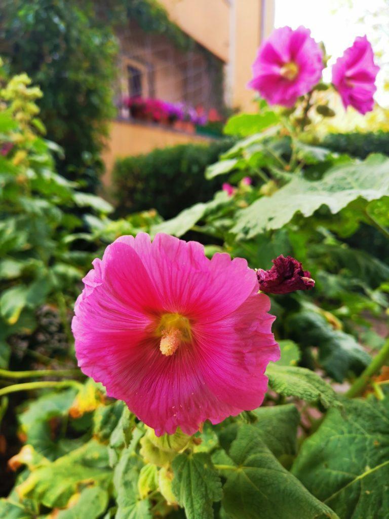 Huawei Mate 20x zdjęcie kwiatka