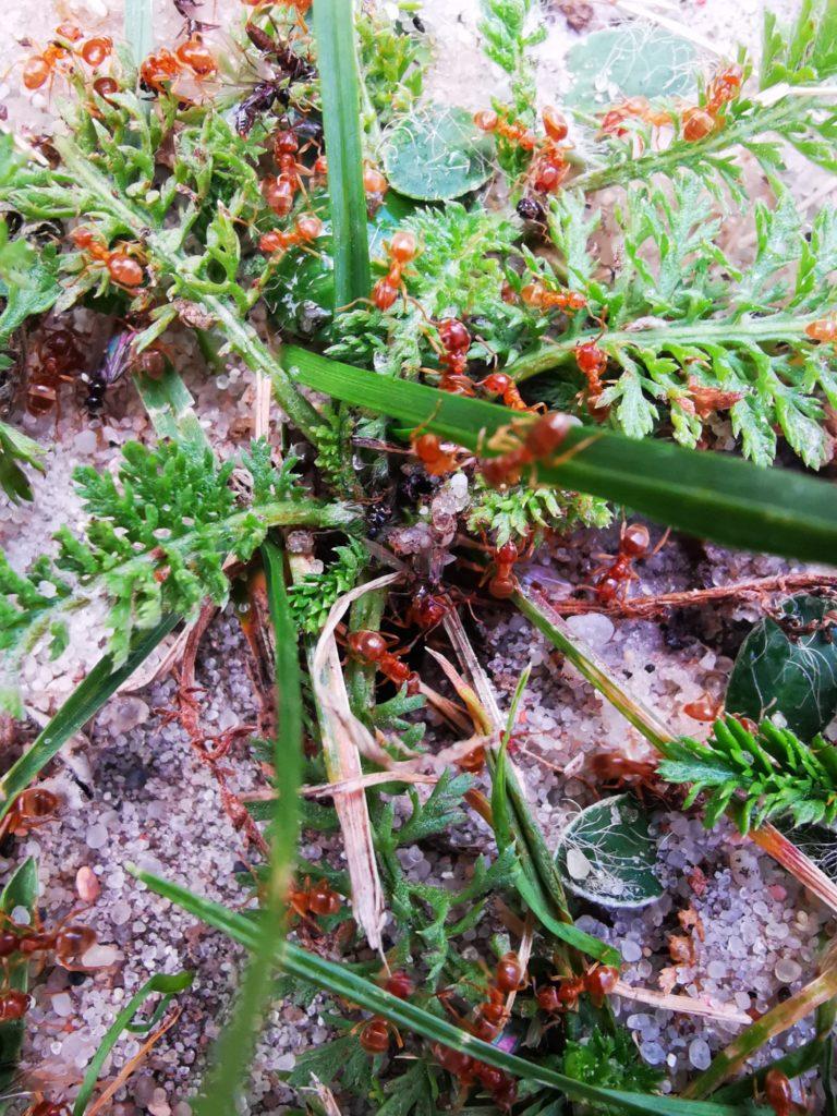 Huawei Mate 20 zdjęcie mrówek