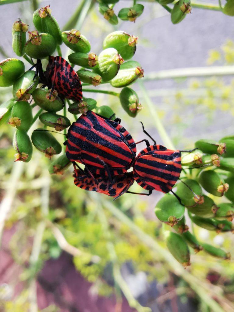 Huawei Mate 20 zdjęcie robaków