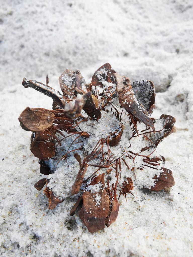 Huawei Mate 20 zdjęcie szyszki na plaży