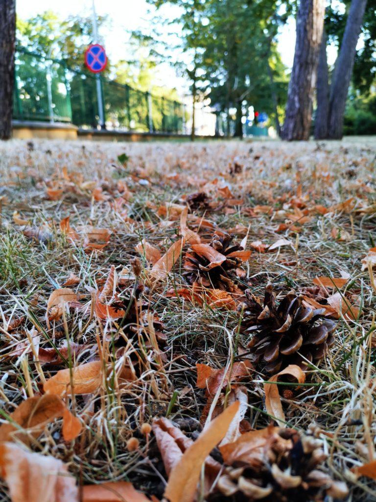 Huawei Mate 20x zdjęcie szyszek i suchej trawy