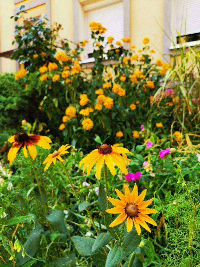 Huawei Mate 20x zdjęcie zółtych kwiatów