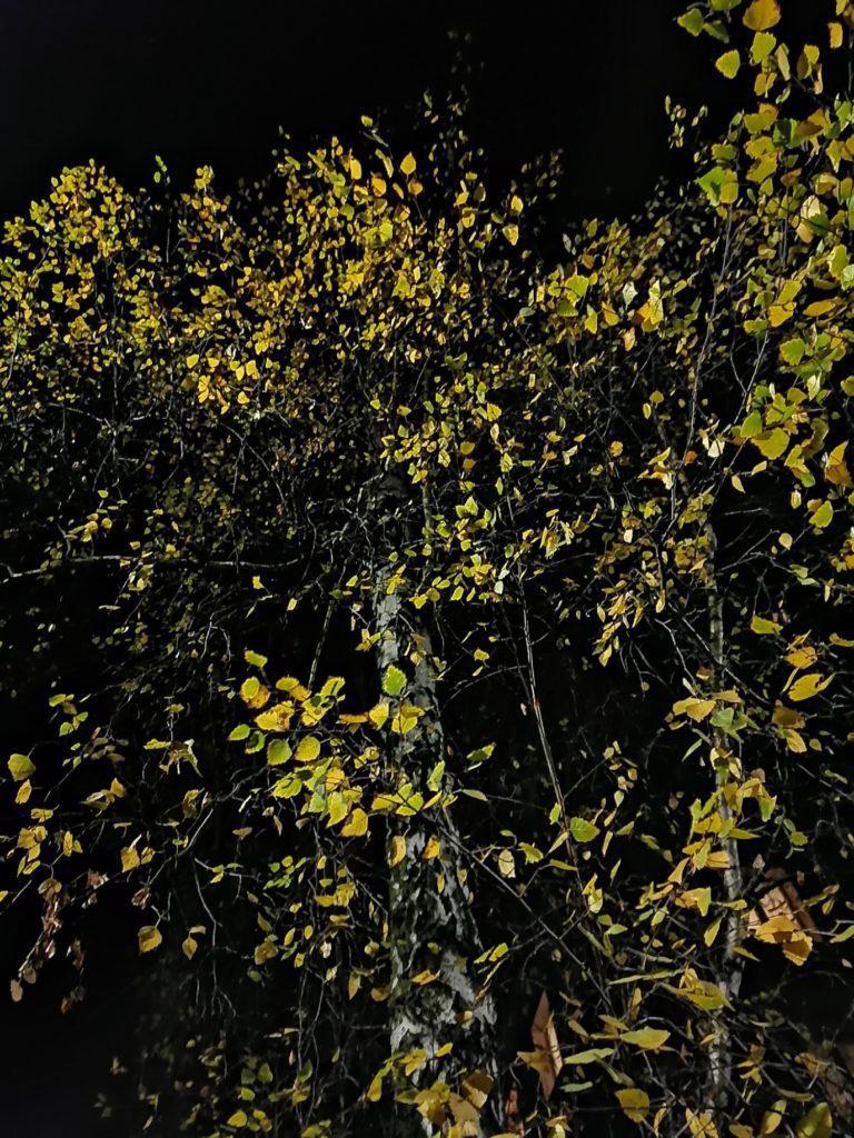 P Smart Pro zdjęcie drzew w nocy