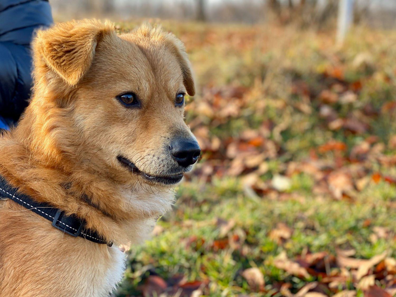 Mój pies Bruno