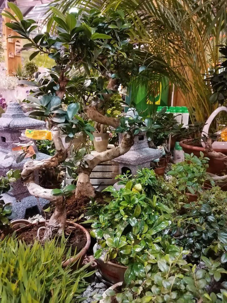 P Smart Pro zdjęcie zielonych roślin