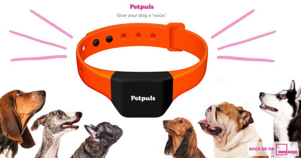 Petplus obroża dla psa