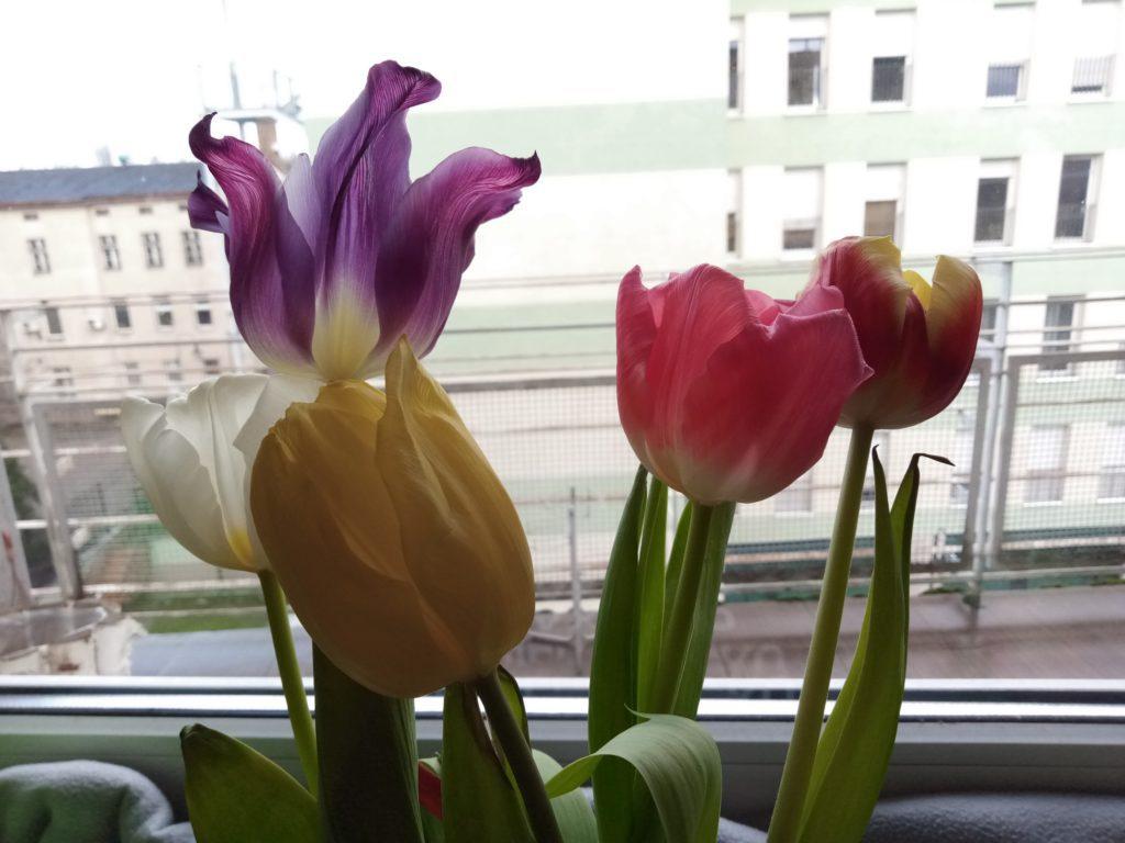 Nokia 2.2 zdjęcie kwiatów