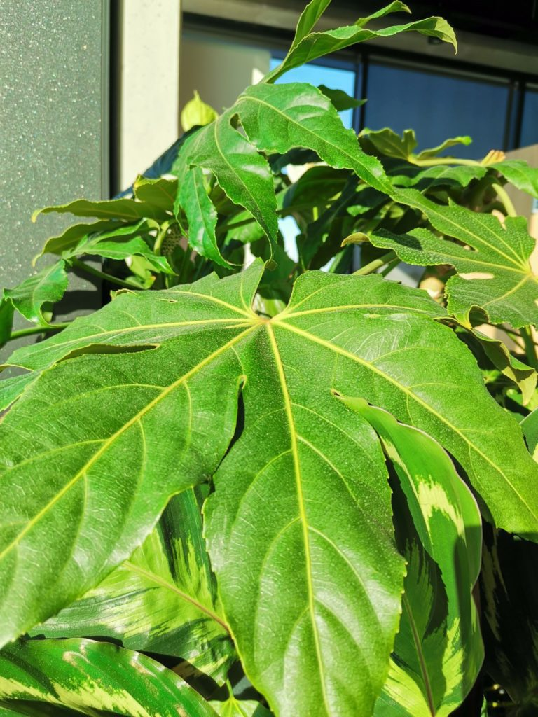 P40 Lite zdjęcie zielonego liścia