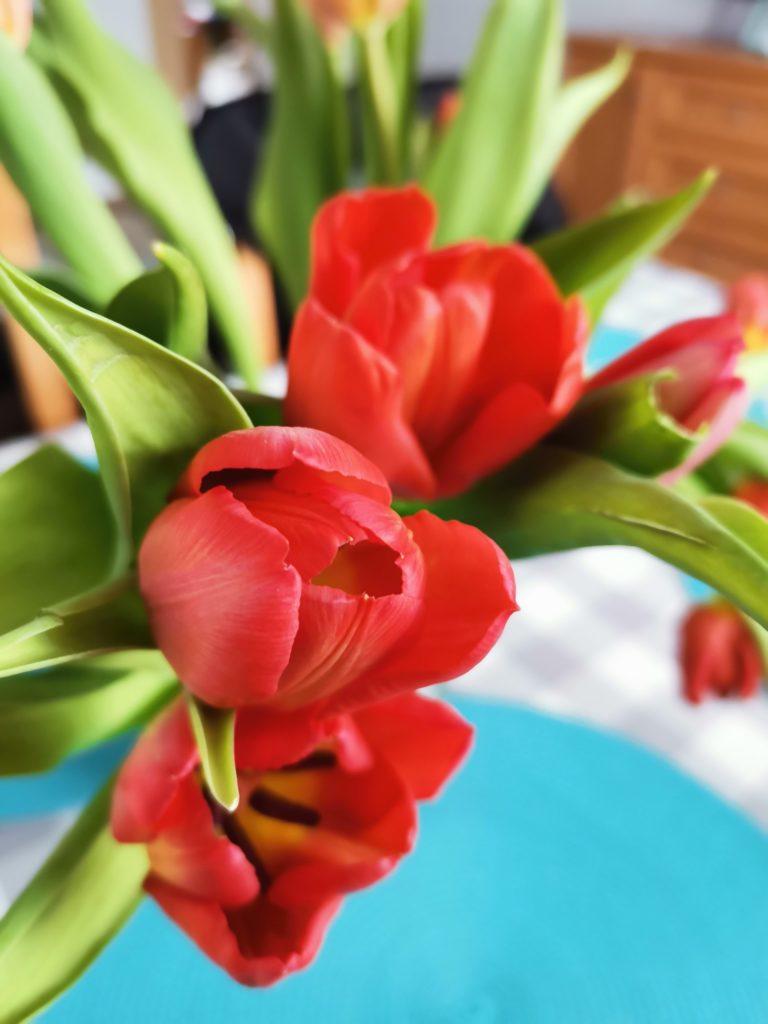 P40 Lite zdjęcie tulipanów