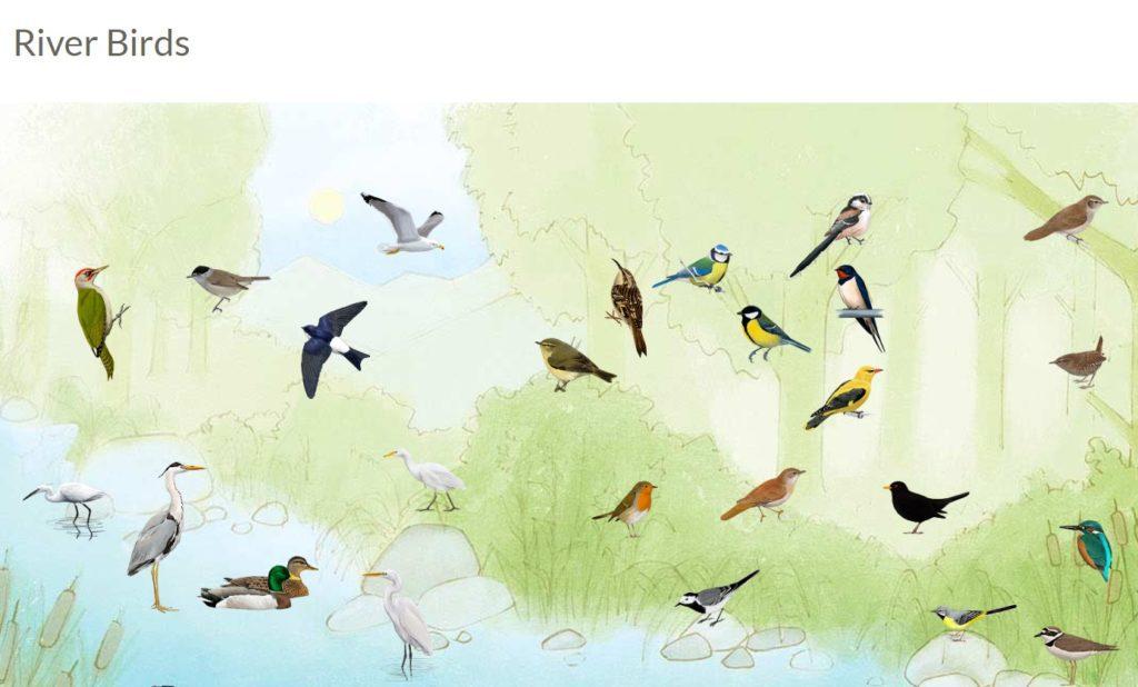 spiew ptakow