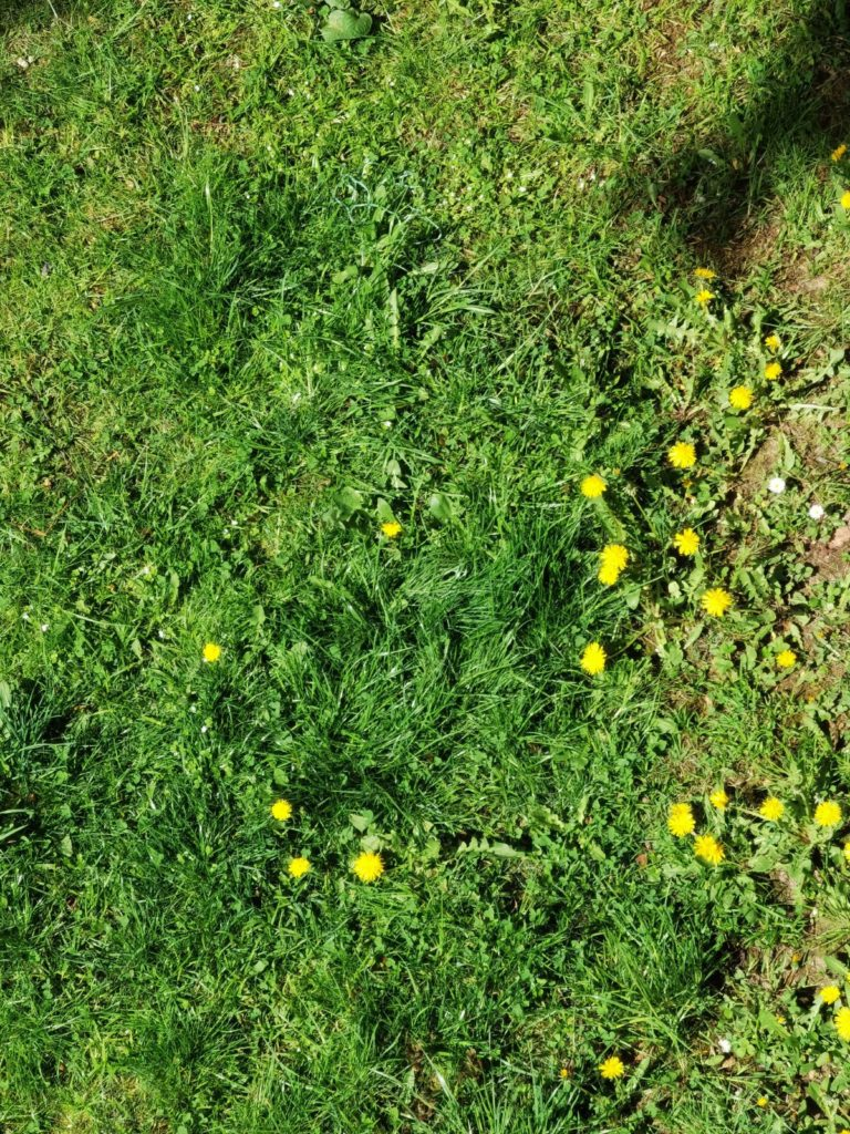 huawei p40 kwiaty