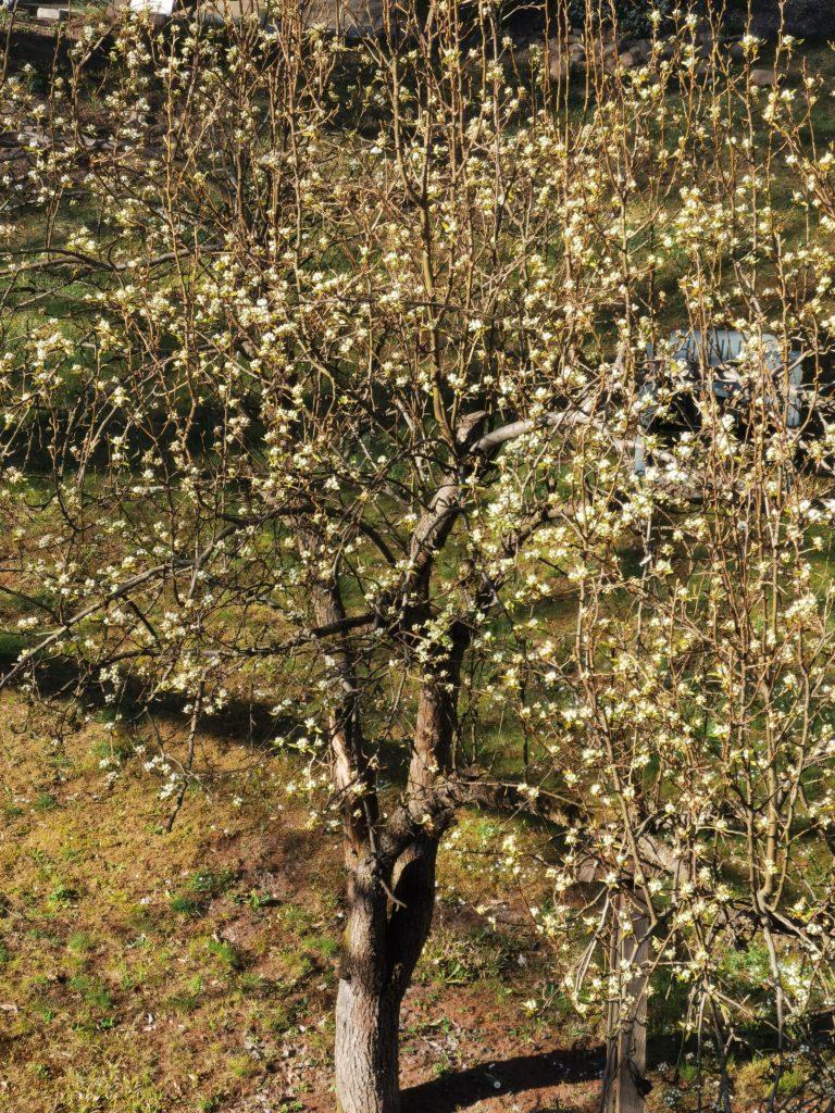 Huawei P40 zdjęcie drzewa