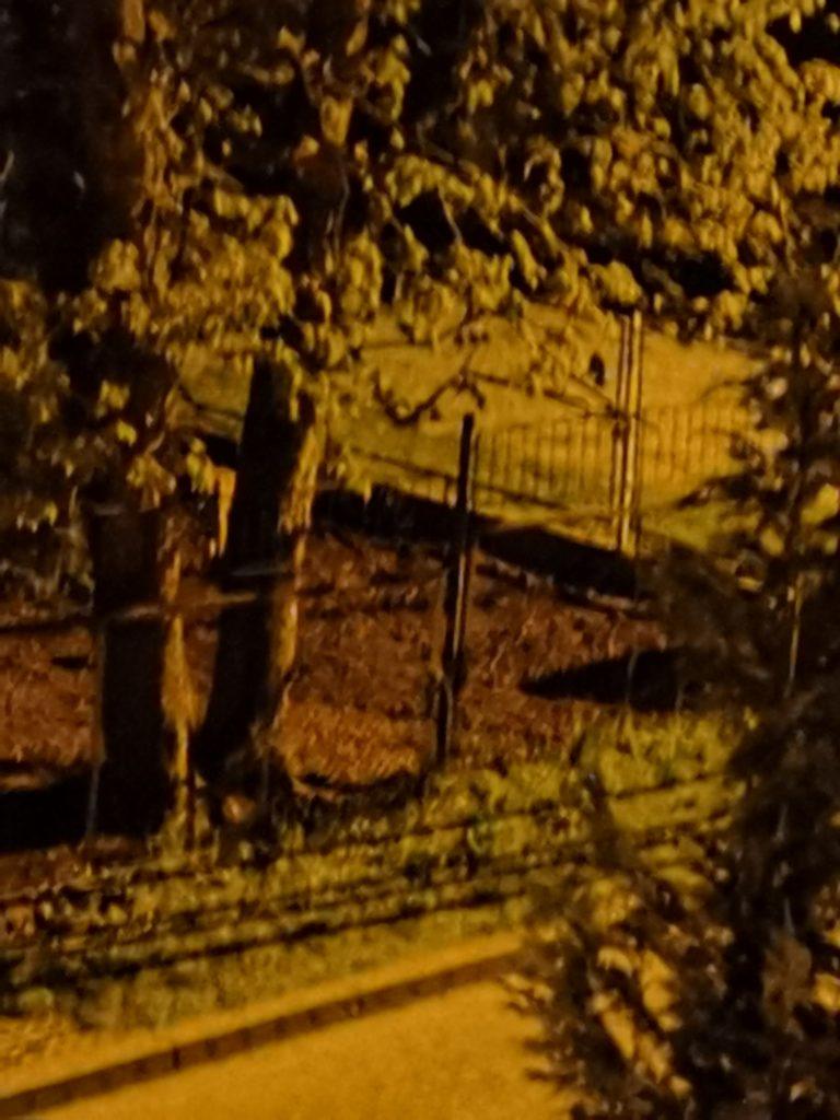 p40 noc zoom 5 2