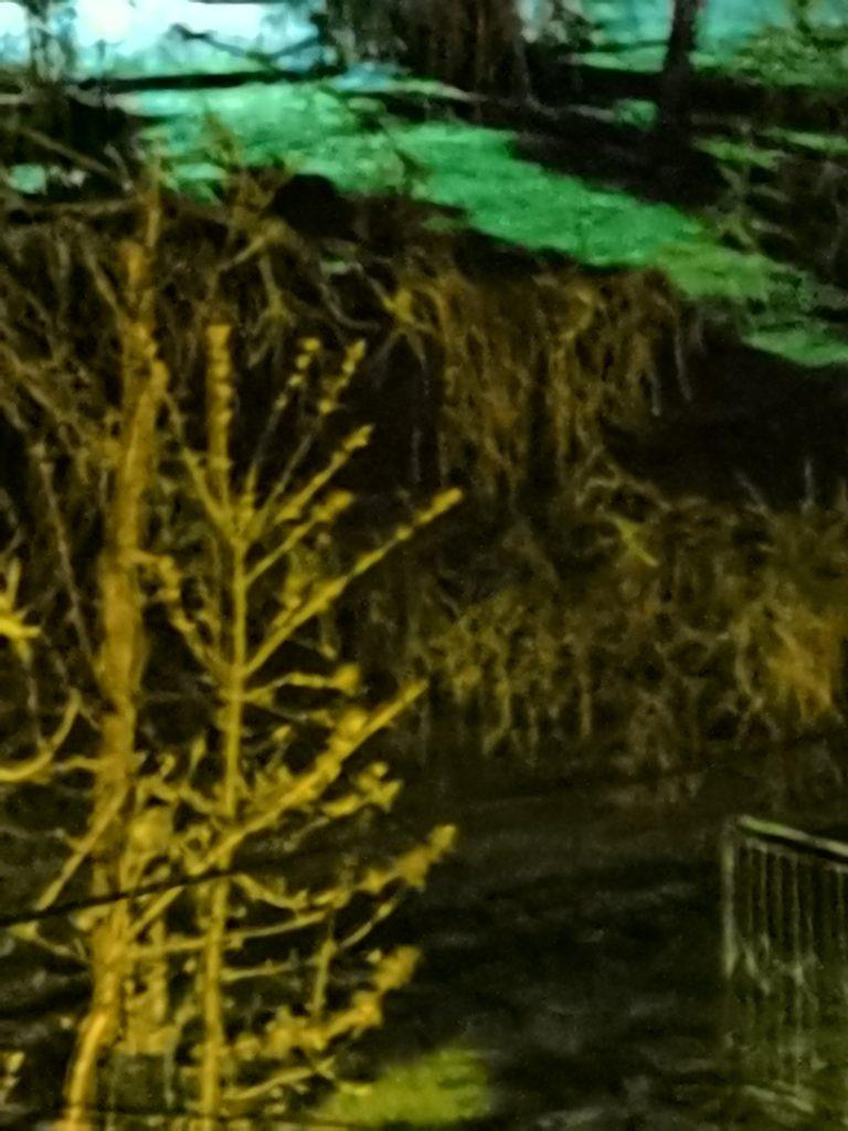 p40 noc zoom 5