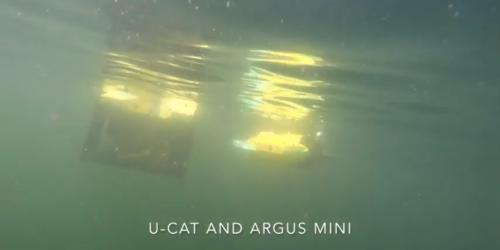 Robotyczne żółwie morskie pomogą w nadzorowaniu hodowli ryb?