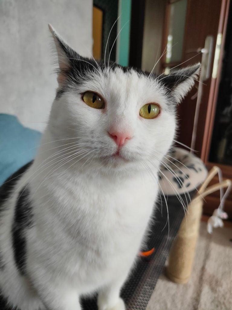 Realme X2 Pro zdjęcie z głównego obiektywu kota
