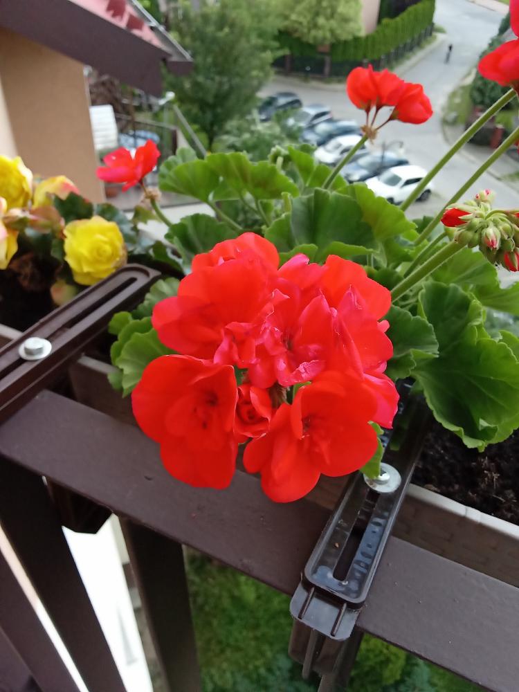 y5p kwiatek