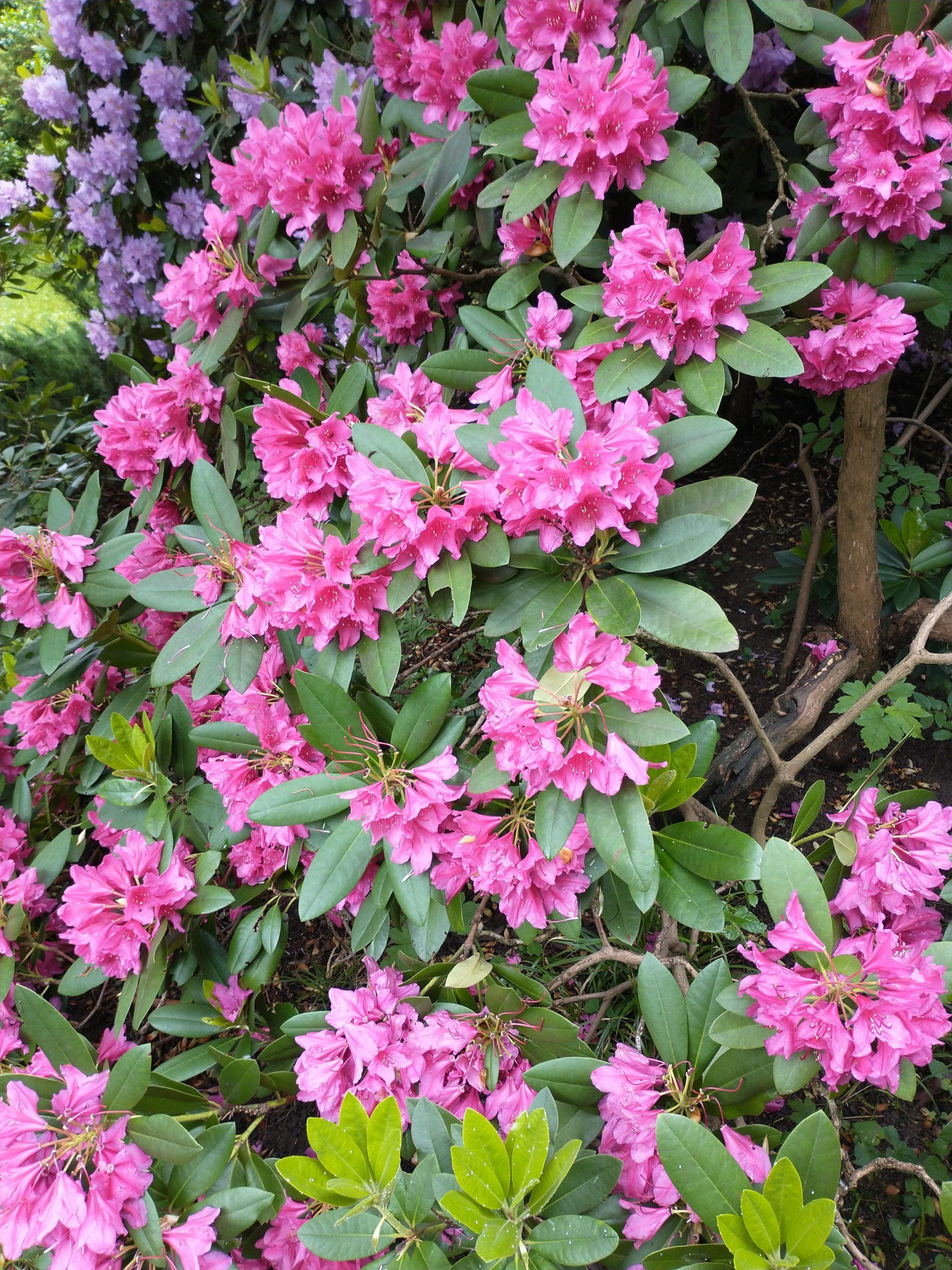 motorola moto g8 zdjęcie różowe kwiaty