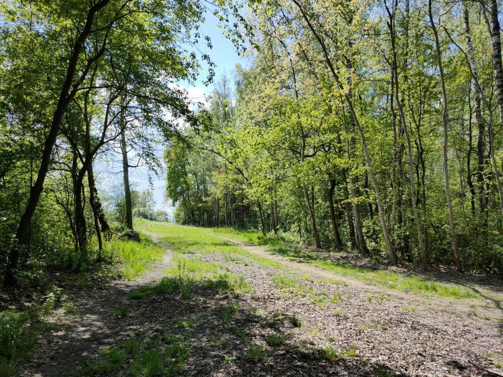 oppo reno3 pro droga w lesie