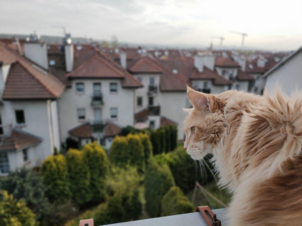 oppo reno3 pro zdjęcie kota