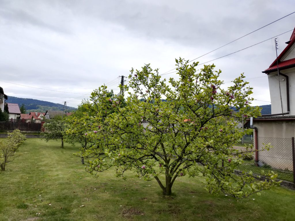 oppo reno3 pro zdjęcie magnolii
