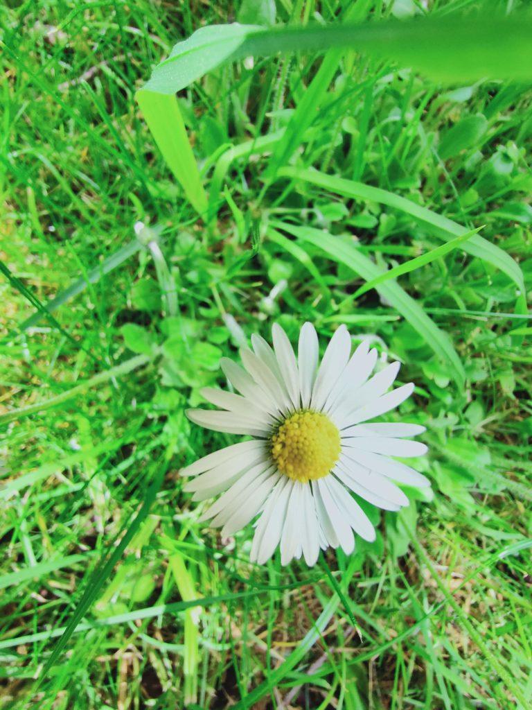 Realme X50 Pro zdjęcie kwiatka