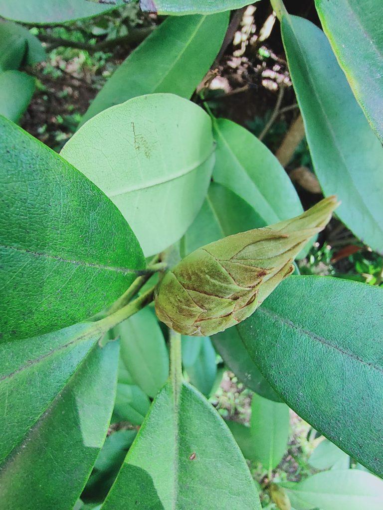 Realme X50 Pro ultramakro roślina