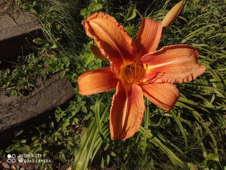 zdjęcie kwiatka makro Redmi Note 9
