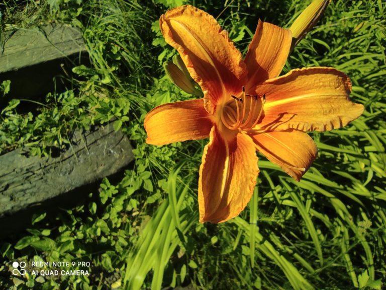 zdjęcie kwiatka makro Redmi Note 9 Pro