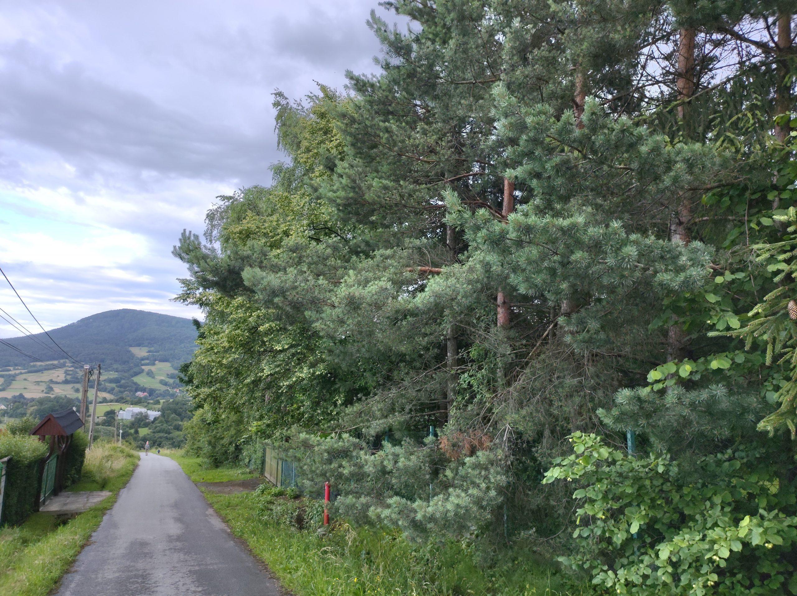 motorola edge zdjęcie krajobrazu