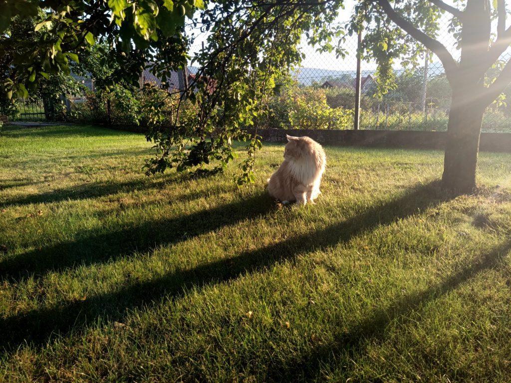 zdjęcie kota w promieniach słonecznych oukitel wp7