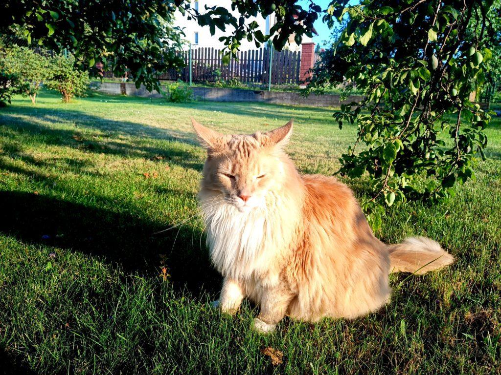 zdjęcie kota oukitel wp7