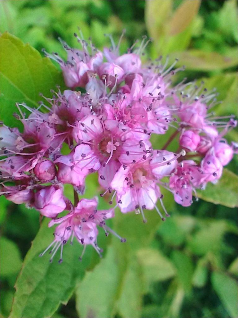 kwiaty-w-makro-htc-desire-20-pro-geex