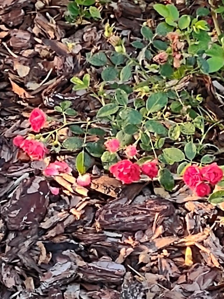 moto g 5g plus kwiatki
