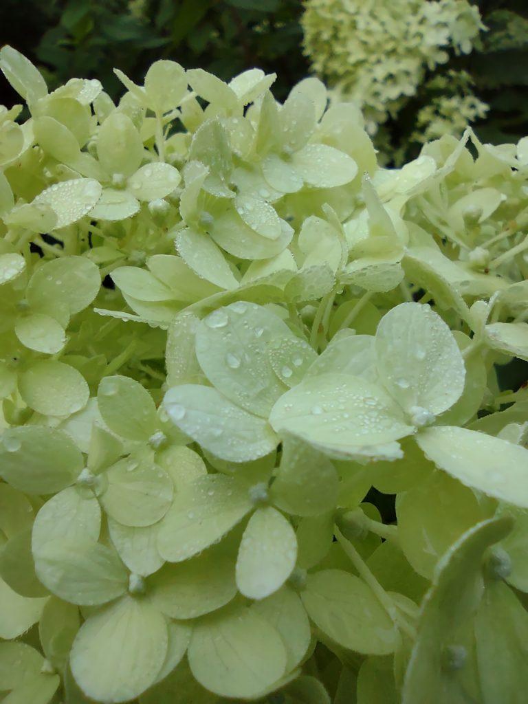 moto g 5g plus makro kwiat