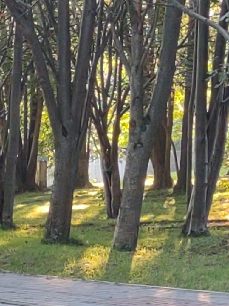 moto g 5g plus zoom drzewa