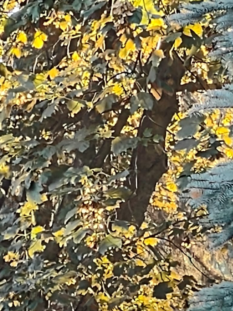 moto g 5g plus zoom drzewo