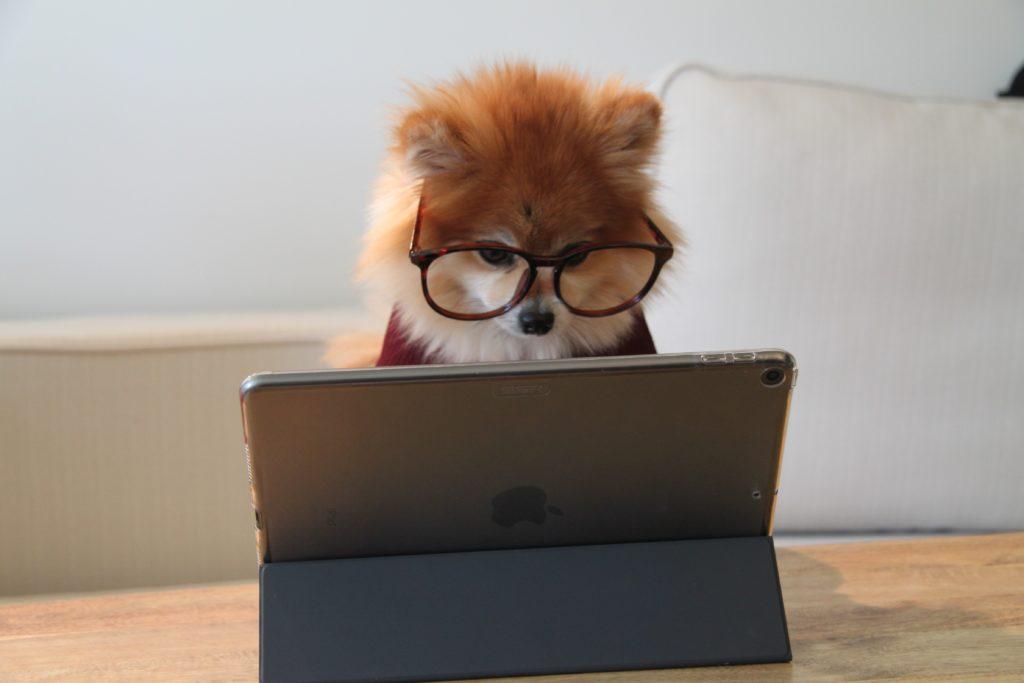 Pies siedzi przed laptopem