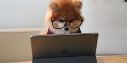 Jaki laptop dla studenta? Czym kierować się przy wyborze?