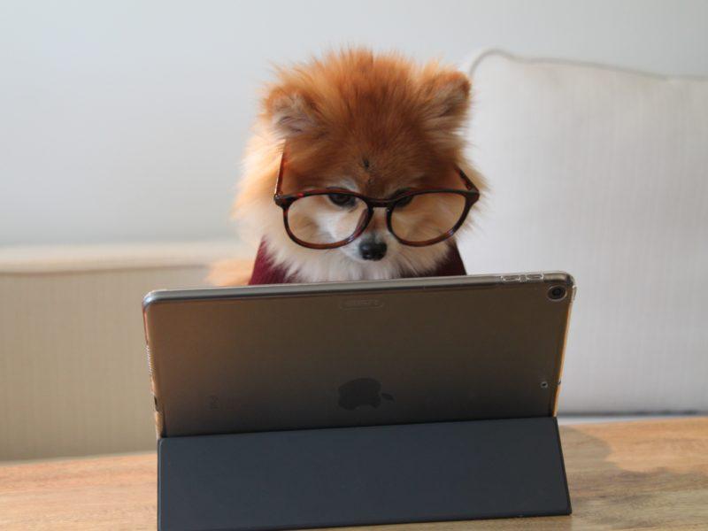 Jaki laptop na studia? Czym kierować się przy wyborze notebooka dla studenta?