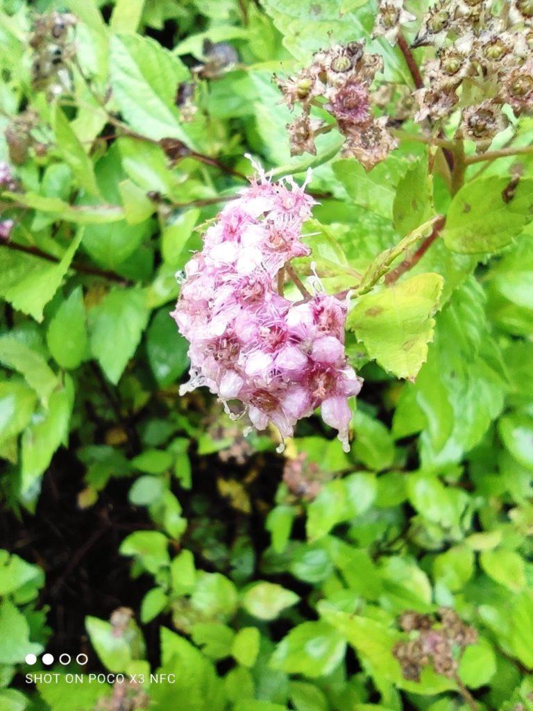 kwiat tryb makro poco x3 nfc