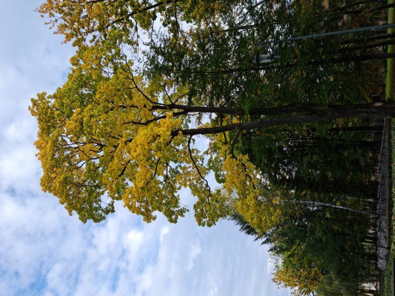 note 20 drzewo 64