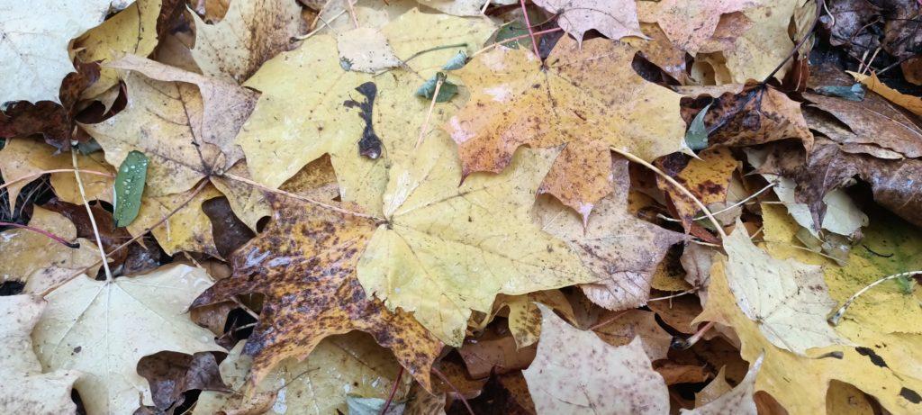 fotografia jesiennych liści bez trybu hdr oppo reno4 lite