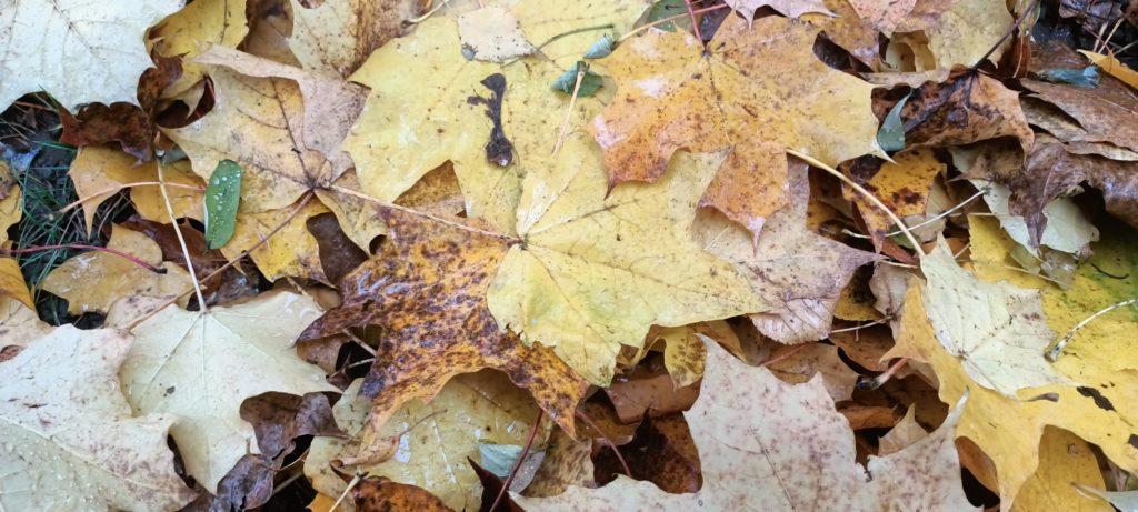 jesienne liście zdjęcie z HDR-em
