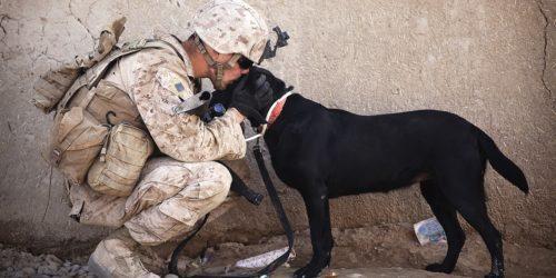 W USA powstają pierwsze gogle AR dla… psów. Skąd ten pomysł?