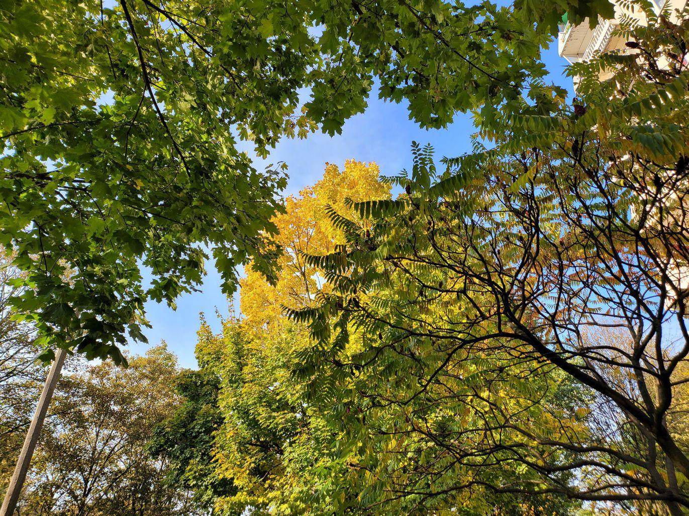 Z Fold2 Drzewa (2)